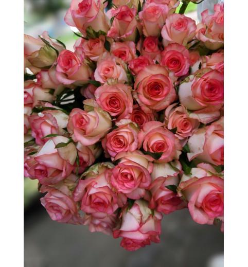 Троянда Джумілія