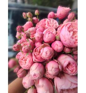 Троянда Сілва Пінк