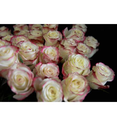 Троянда Світнес 90 см