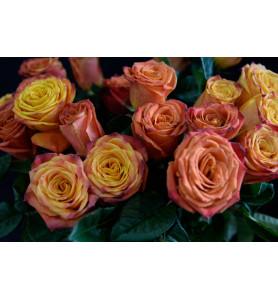 Троянда готча 80 см